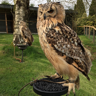 Corporate Falconry Experience