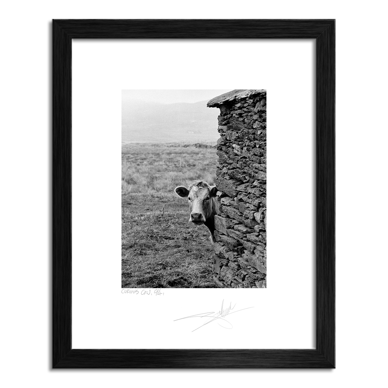 "Curious Cow, Co. Kerry 94 - 24""x30"" image"
