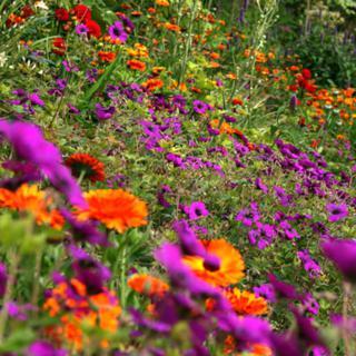 €50 Gardening Lesson Gift Voucher image