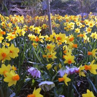 €130 Gardening Lesson Gift Voucher