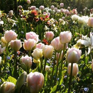 €195 Gardening Lesson Gift Voucher
