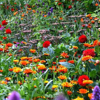 €260 Gardening Lesson Gift Voucher