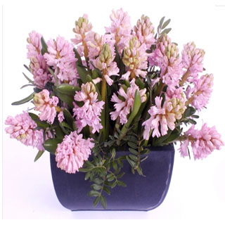 Hyacinth Arrangement image