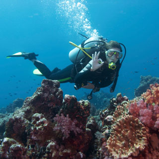 Open Water PADI Courses