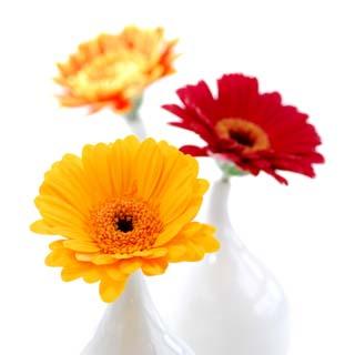 Home & Garden Vouchers