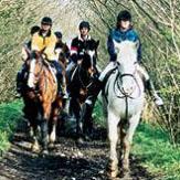 Horse Riding & Trekking