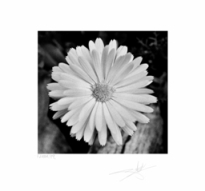 "Special Edition - 24"" x 24"" Unframed Photograph"
