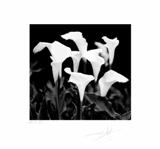 "Flora 99 - 12""x12"" image"