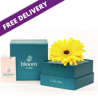 Bloom in a Box - Yellow Gerbera image