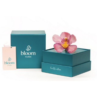 Bloom In A Box - Orchid image