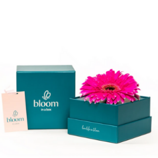 Bloom in a Box - Pink Gerbera image