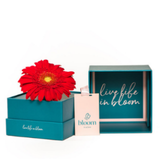 Bloom in a Box - Red Gerbera image
