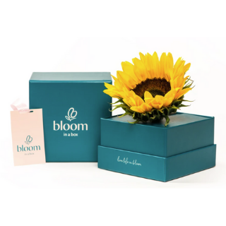Bloom In A Box - The Sunflower image